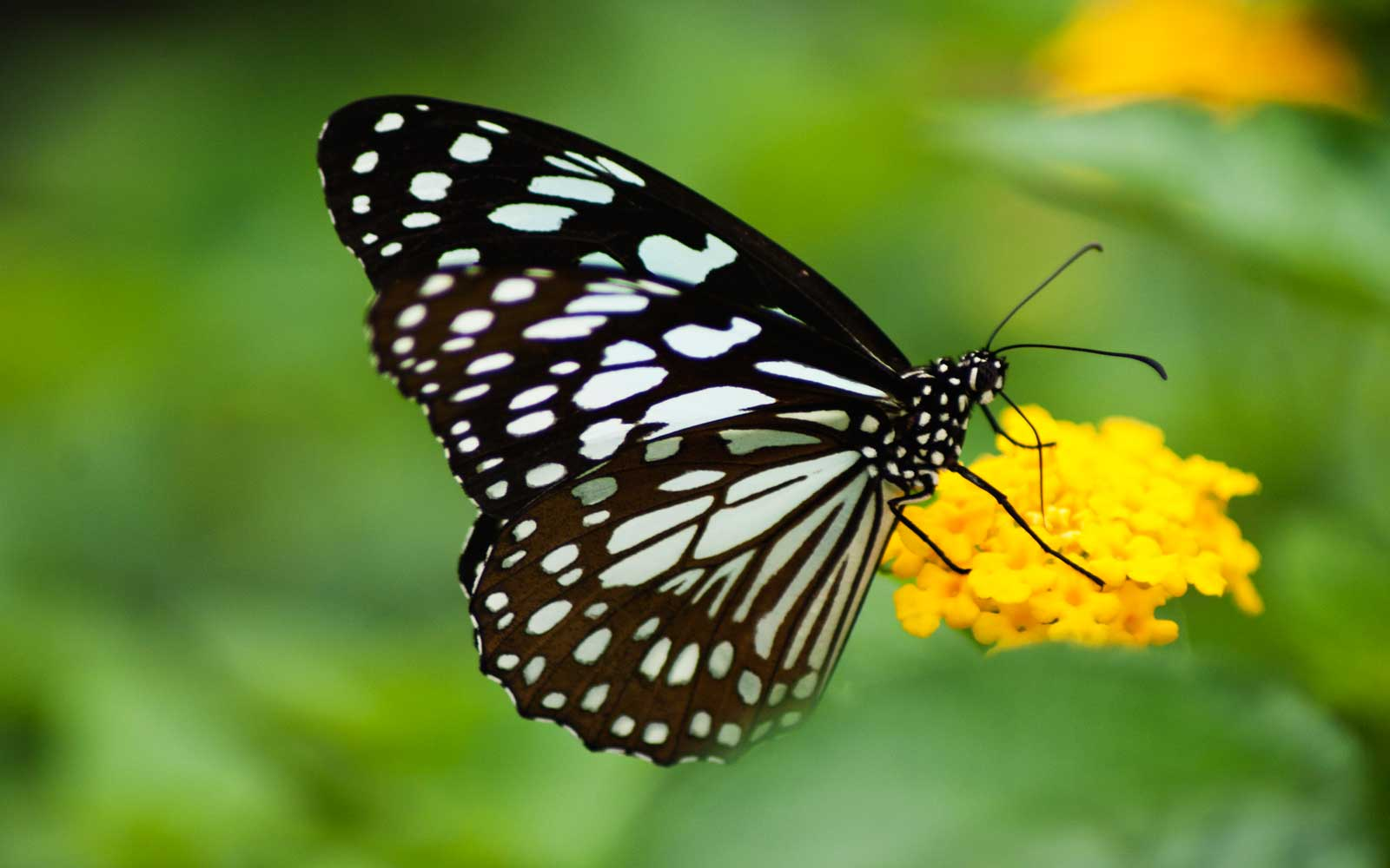 If You Want to Be Surrounded By Butterflies, Head to This National Park
