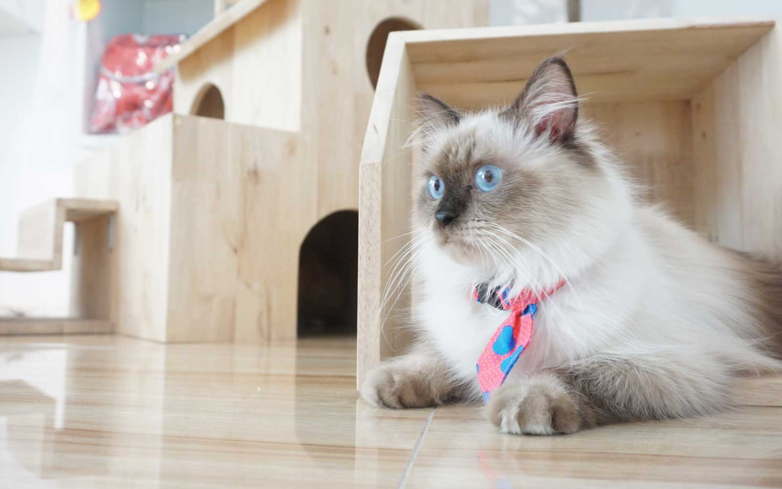 Cats Vacation Better Than Humans at This Five-star Hotel