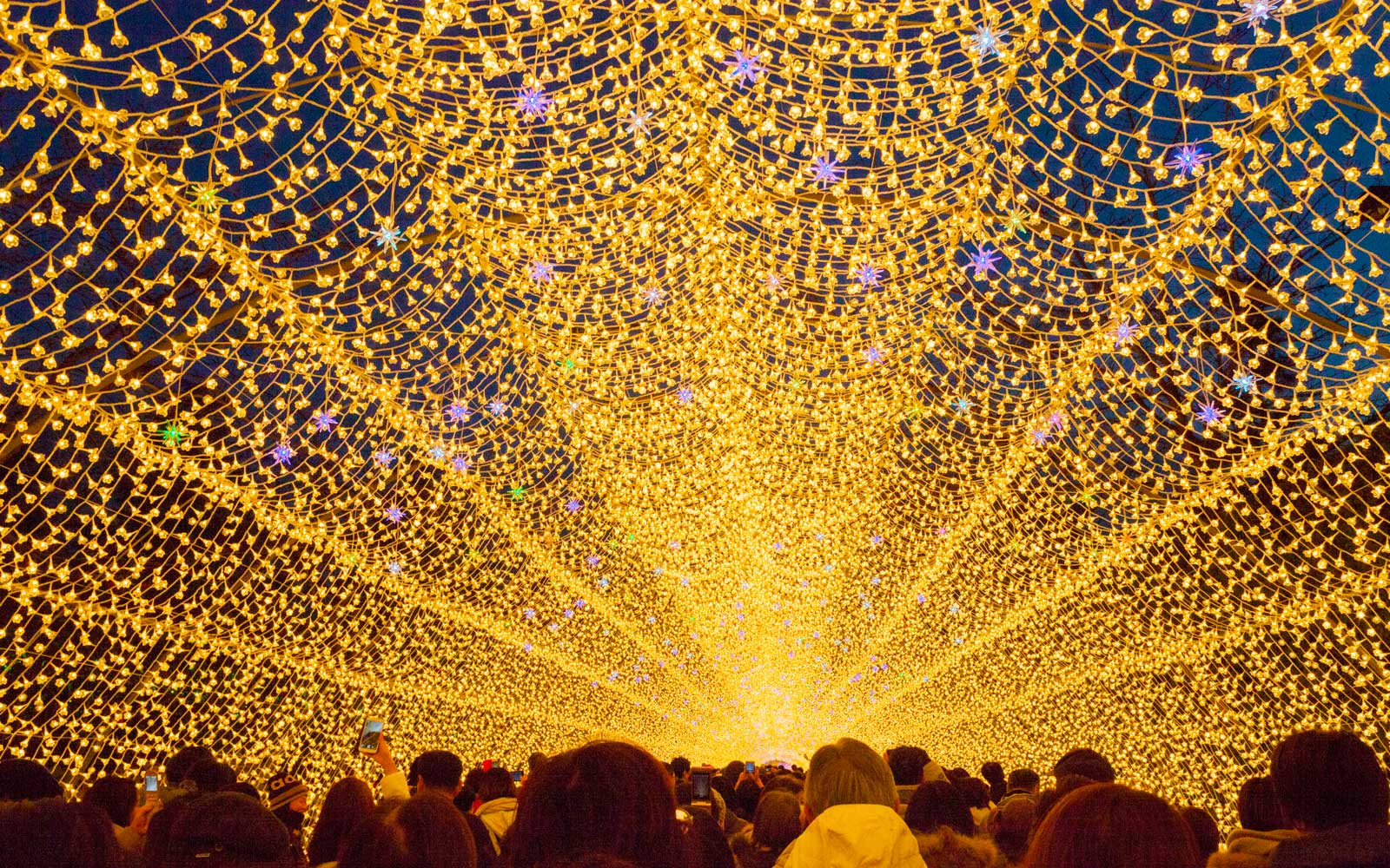 Japanese Light Festival Brings Fall Foliage to Life in the Dead of Winter