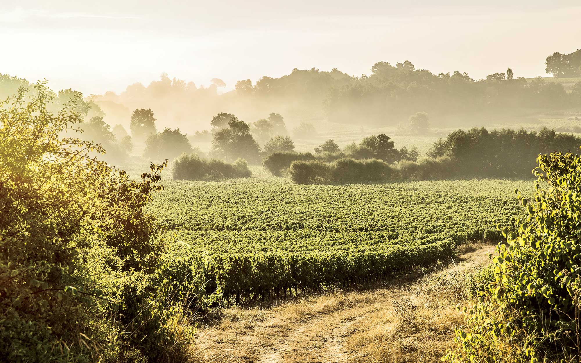Why Bordeaux Should Be Your Next Vineyard Vacation