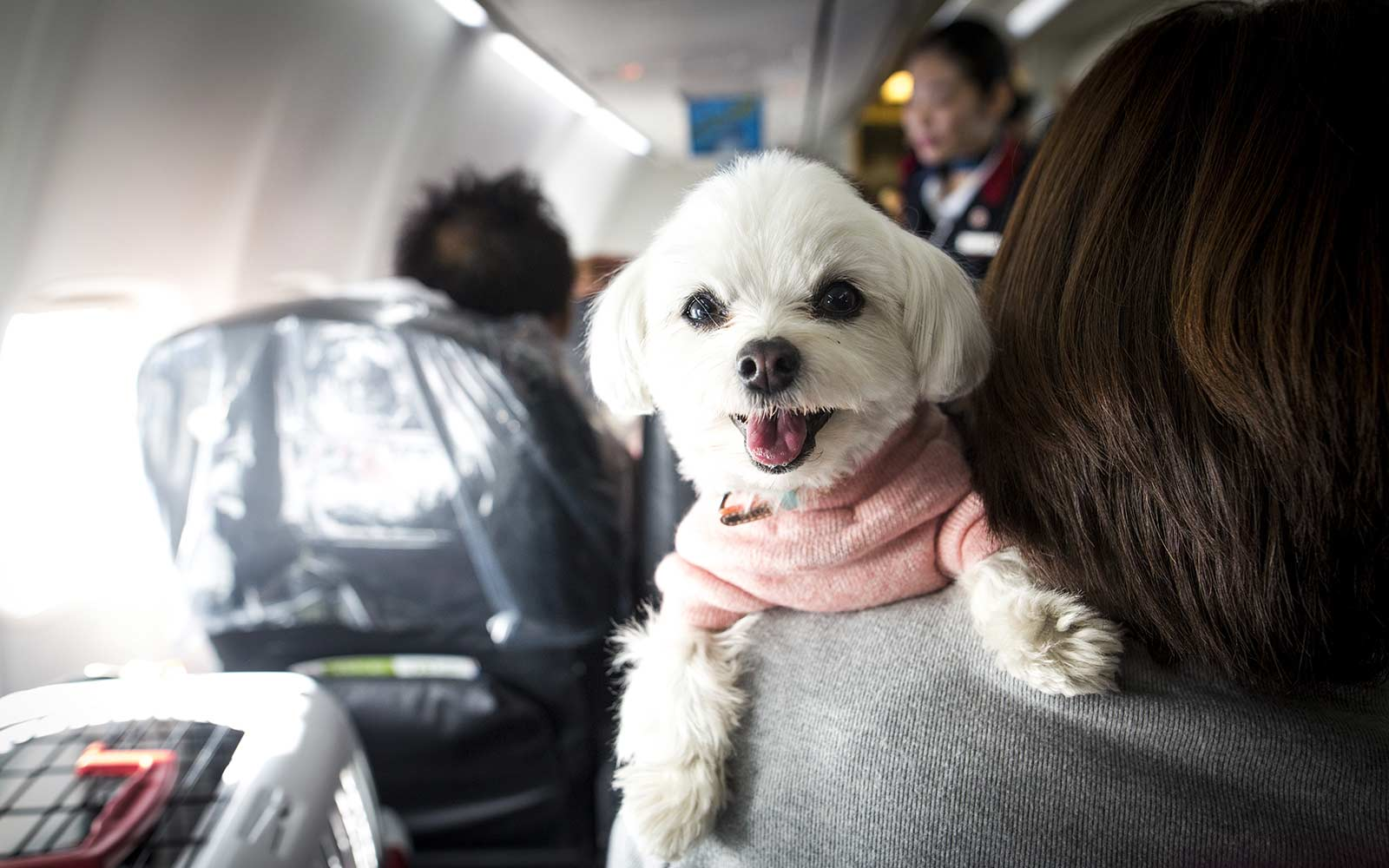This Dog-friendly Airline Is an Animal Lover's Dream Come True