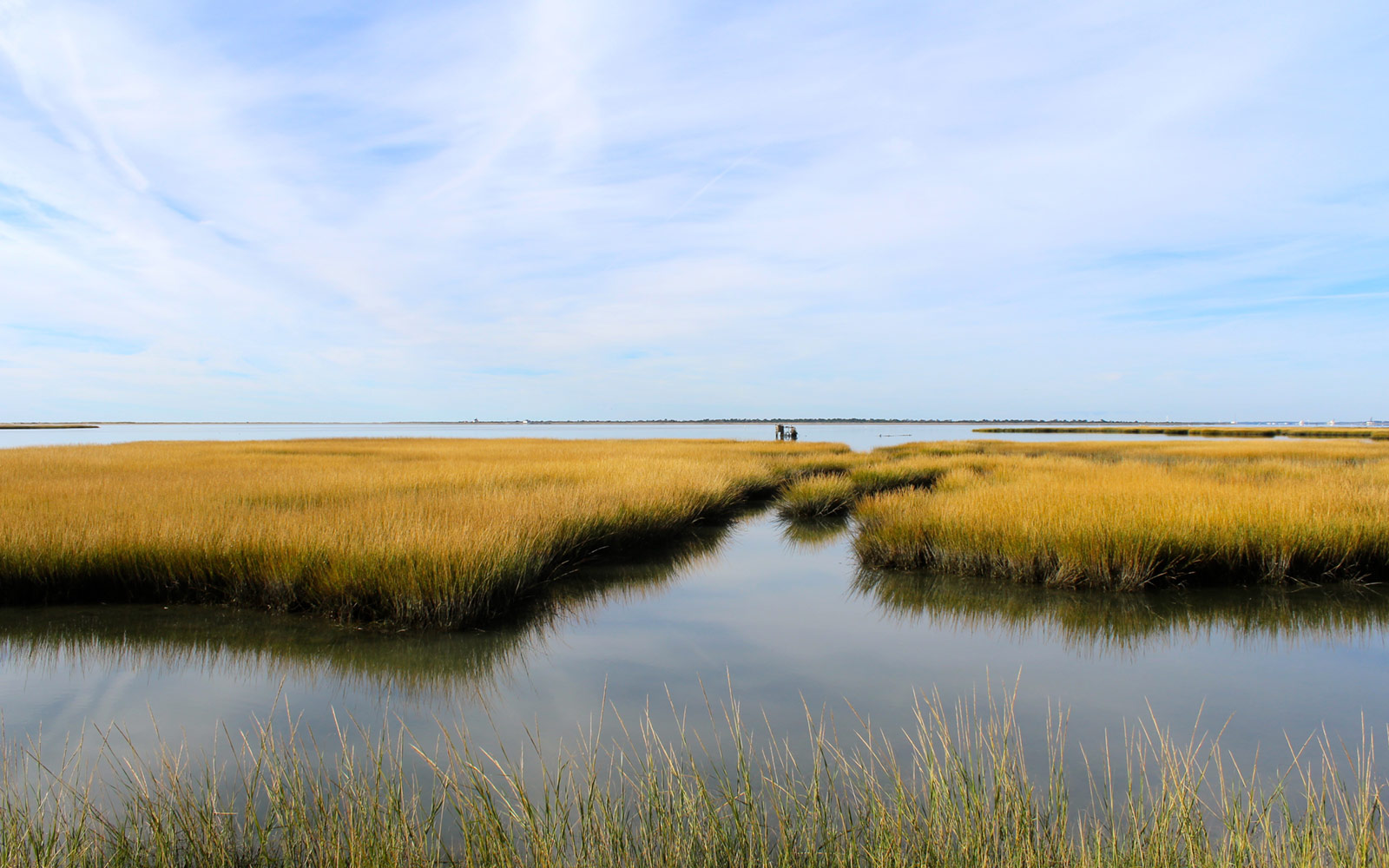 Marsh, Assateague Island