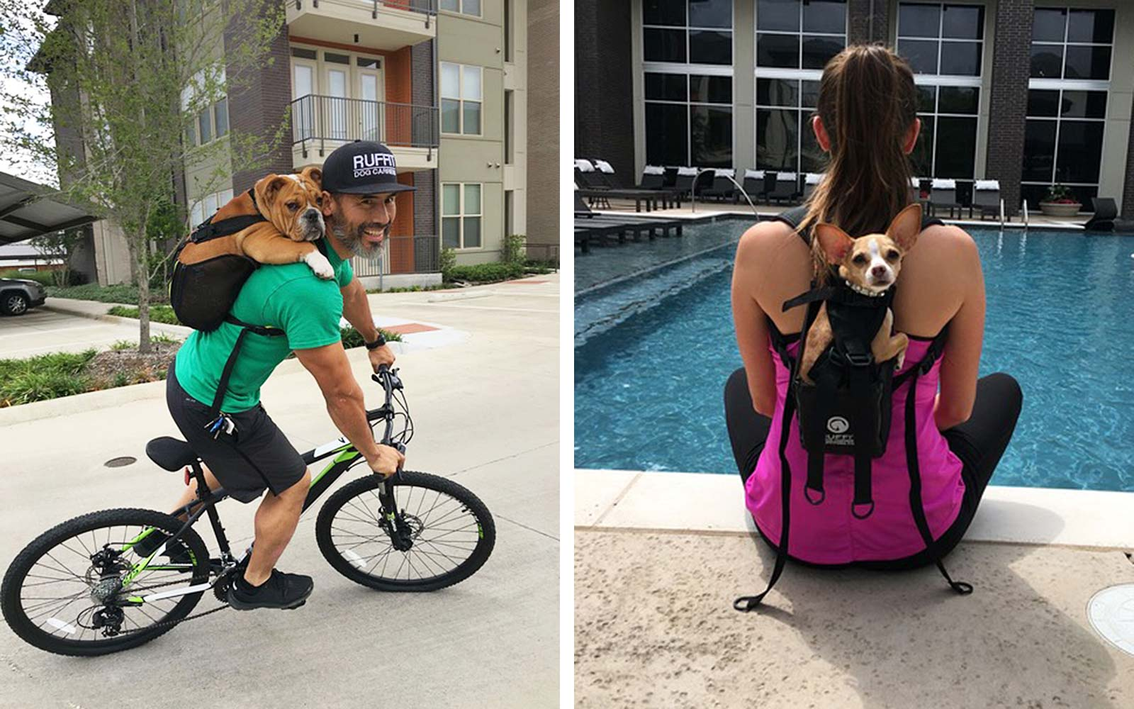 This Dog Backpack Makes It Easy to Take Your Pet Everywhere You Go
