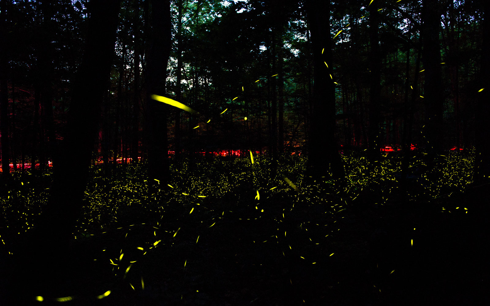 Don't Miss Thousands of Fireflies Lighting Up the Great Smoky Mountains