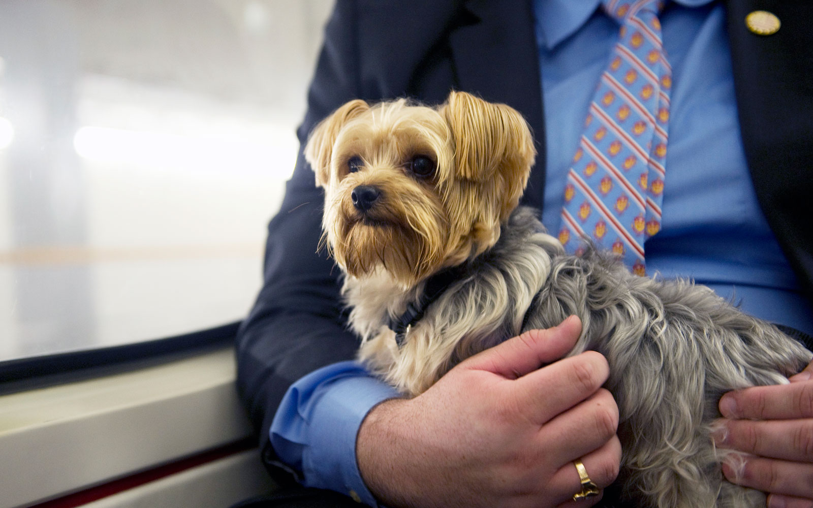 Parisian Dogs Can Now Ride the Subway and Commuting Just Got a Lot Cuter