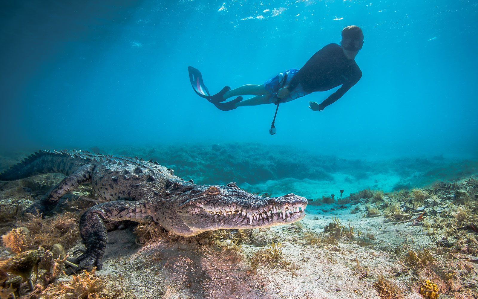 Underwater Photos Show What It's Like to Dive With Sharks and Crocodiles in Cuba