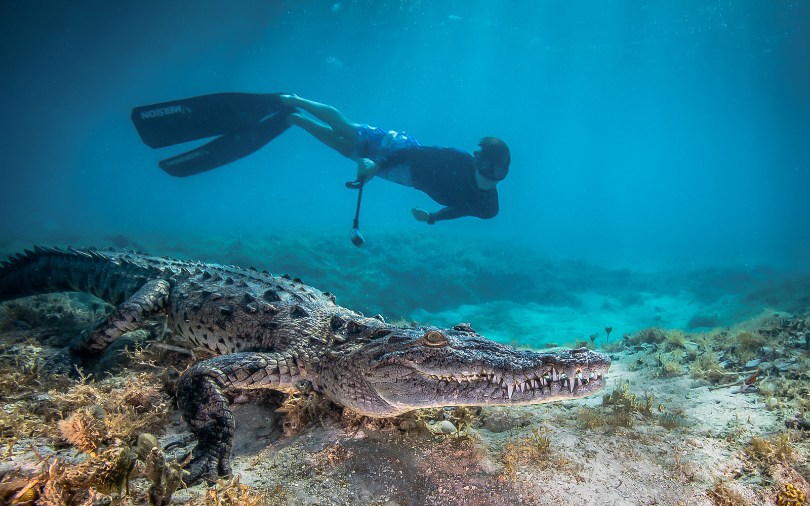 philip-hamilton-son-diving-CROC0417.jpg