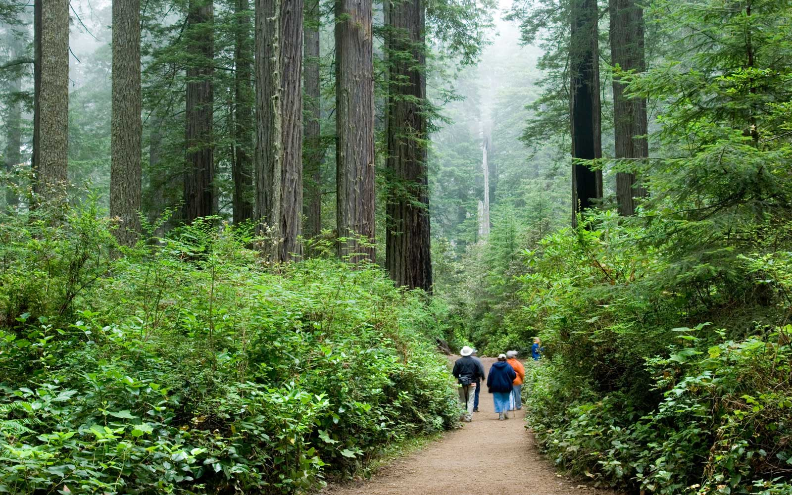 Seniors Can Get Lifetime Access to National Parks for $10
