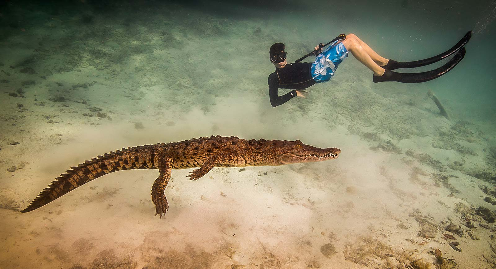 Swim with crocodiles