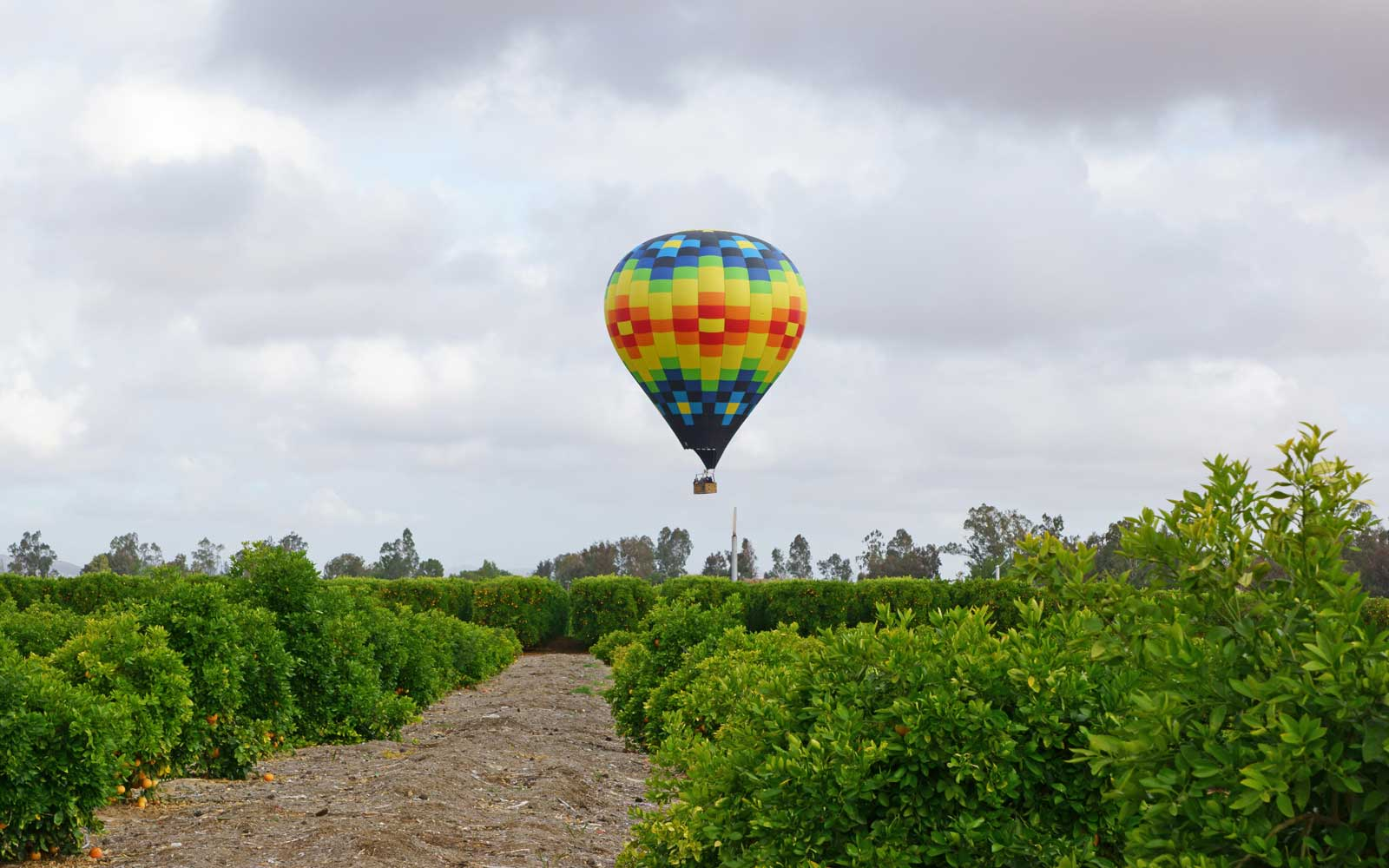 Temecula Valley winery and orchards in Southern California during Balloon and Wine Festival
