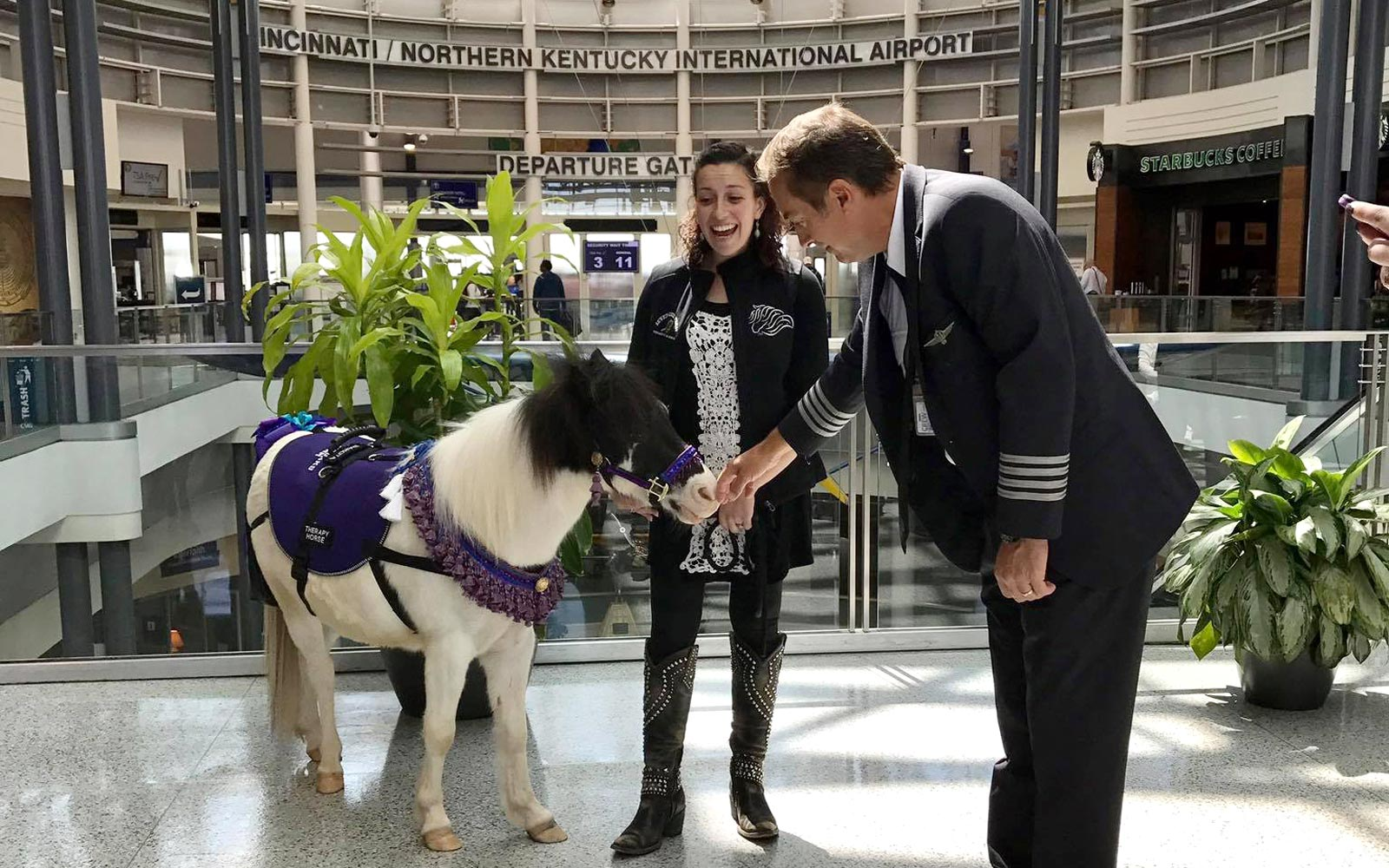 Miniature Therapy Horses at CVG