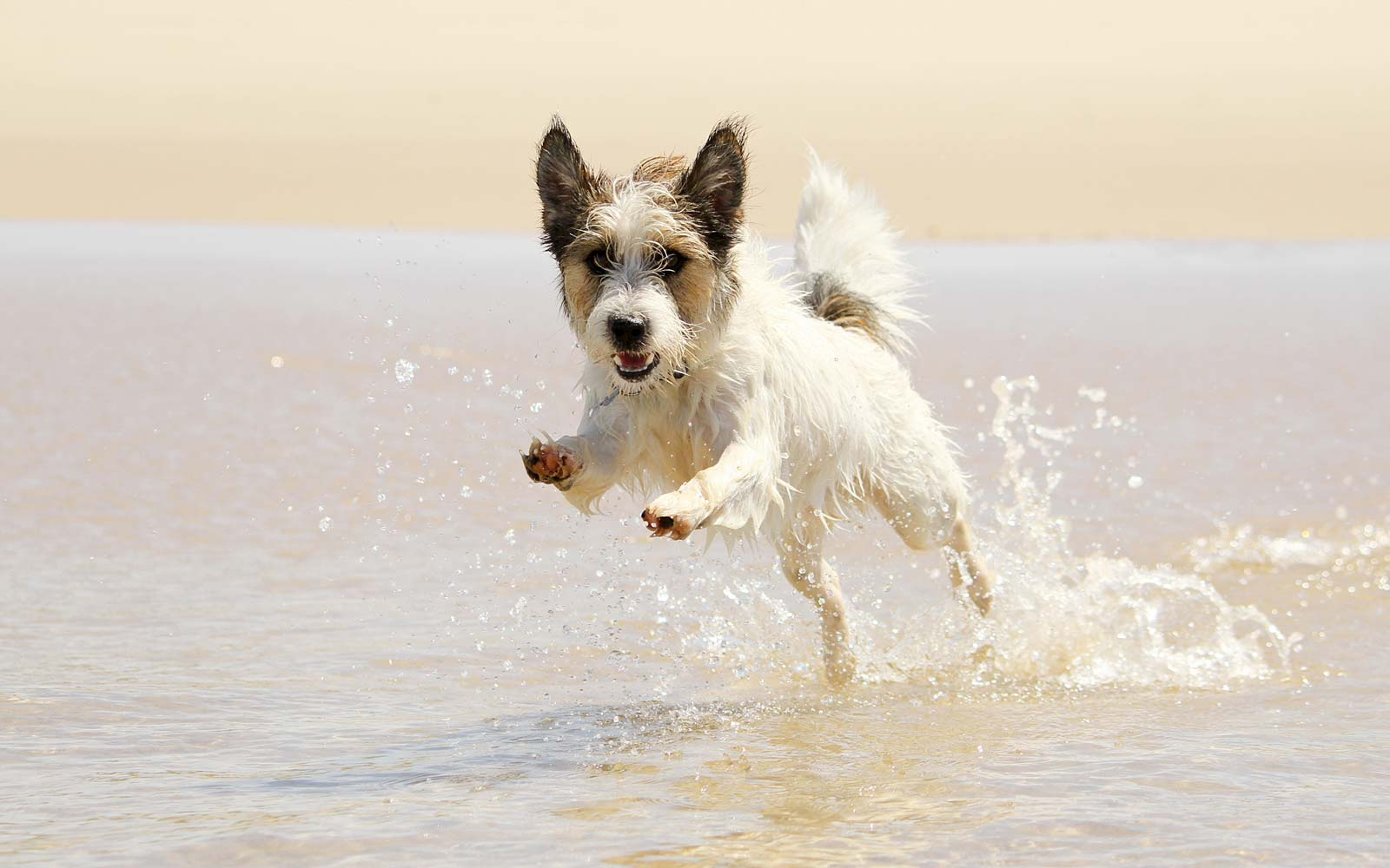 Best Dog-friendly Beaches in the U.S.