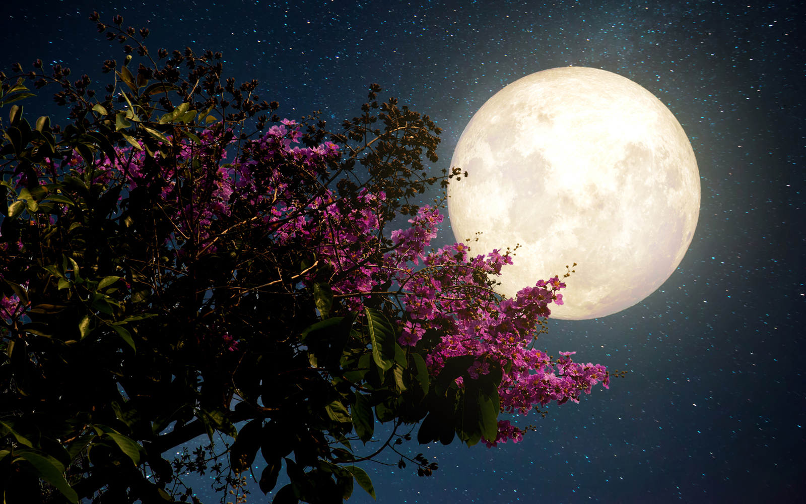 Watch the 'Flower Moon' rise on Wednesday night