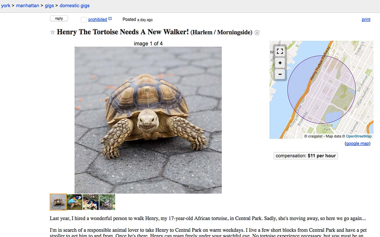 Henry Tortoise New York City Walker Craigslist Ad
