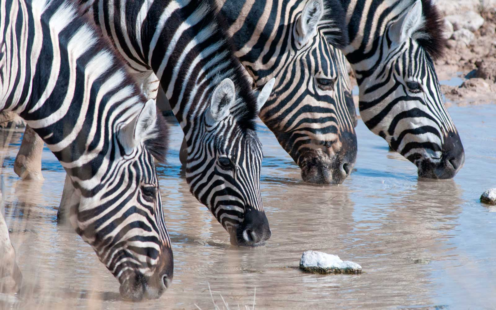 Tourist takes photo of zebra who can't seem to stop laughing