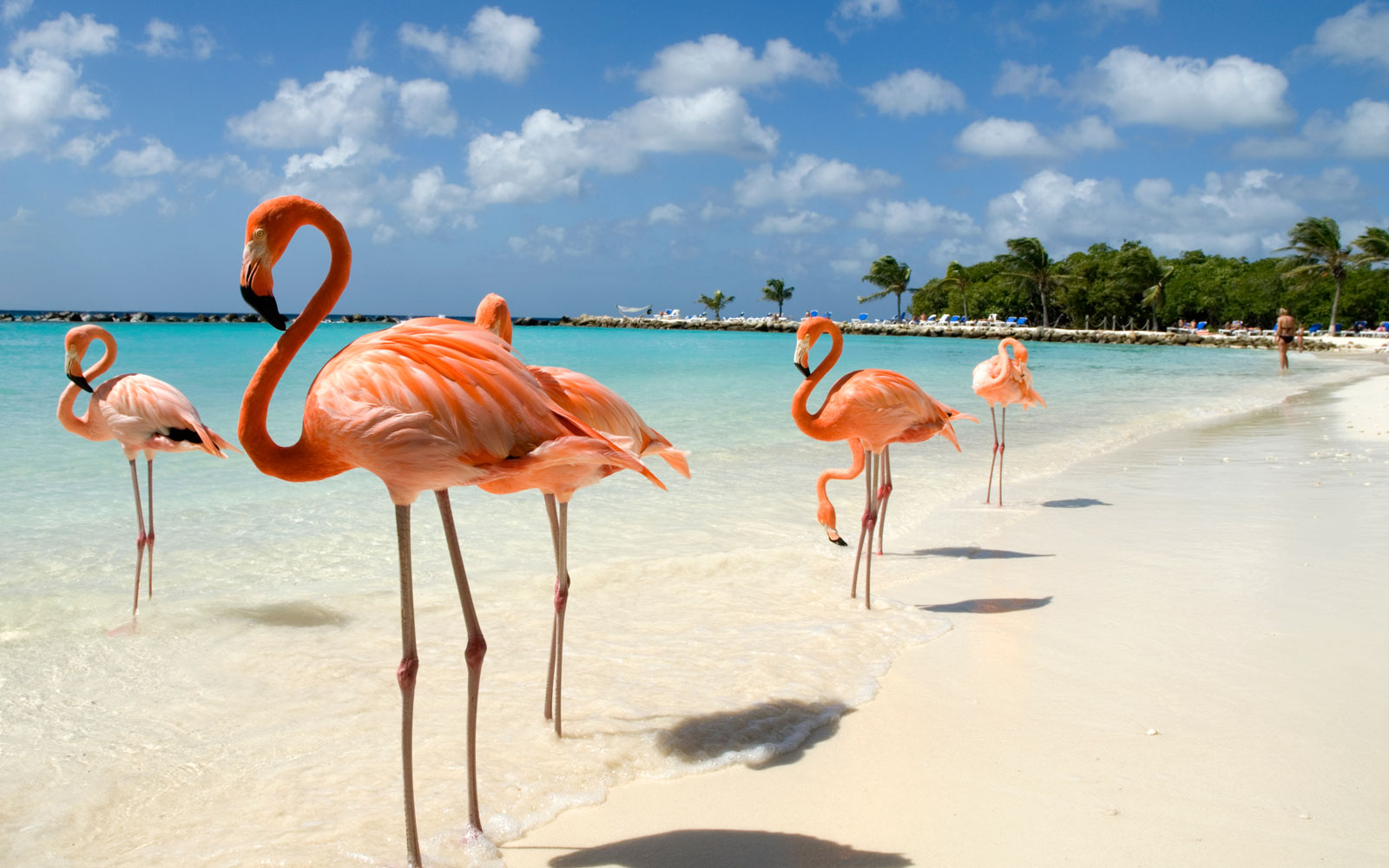 What It's Like to Swim With Flamingos in Aruba