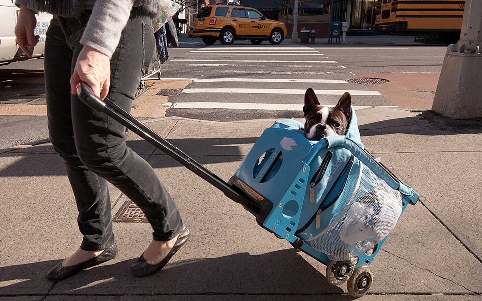 Dogs have to be in a carrier to ride the NYC subway, so big dog owners are getting creative
