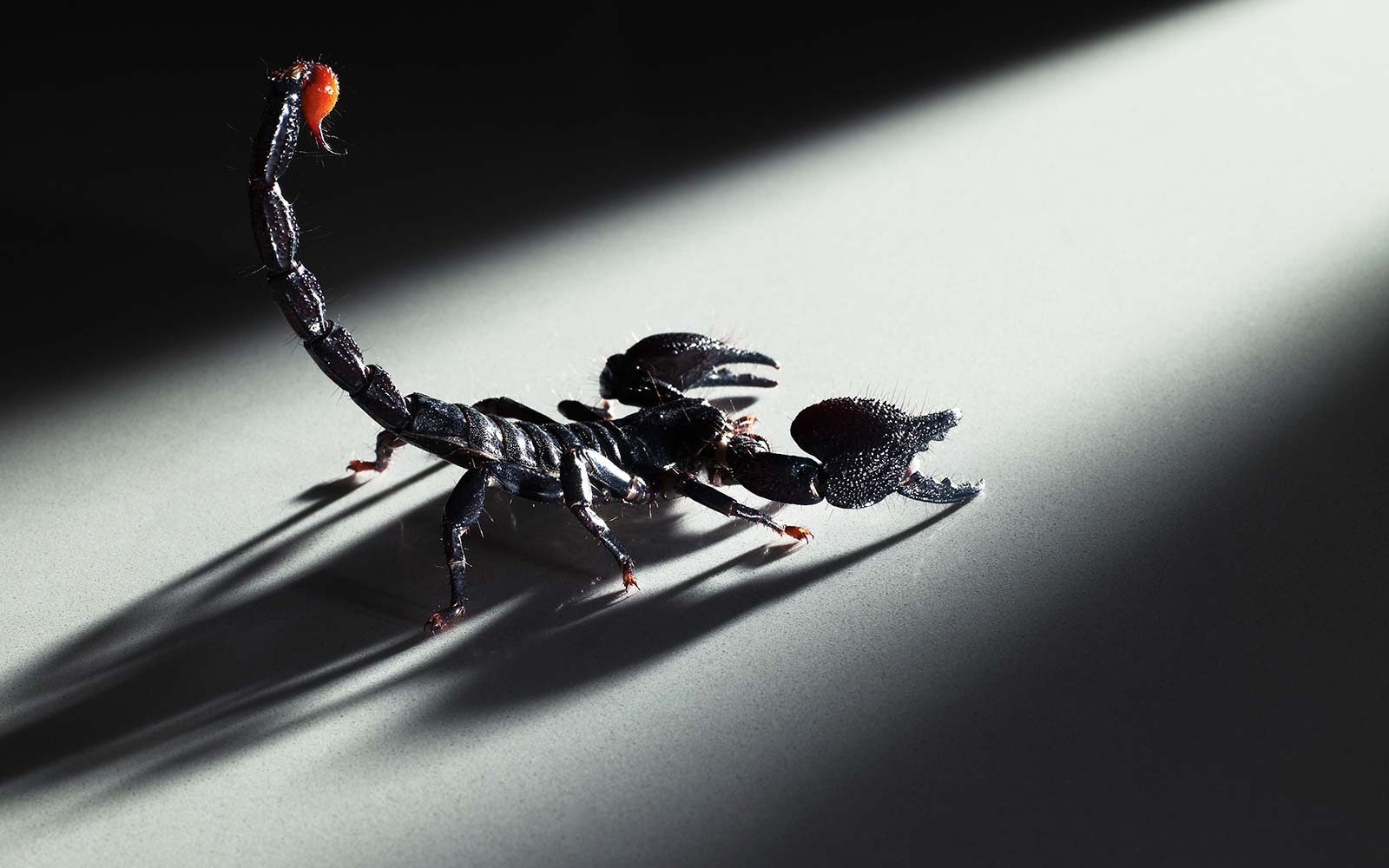 Scorpion stings passenger on flight — again