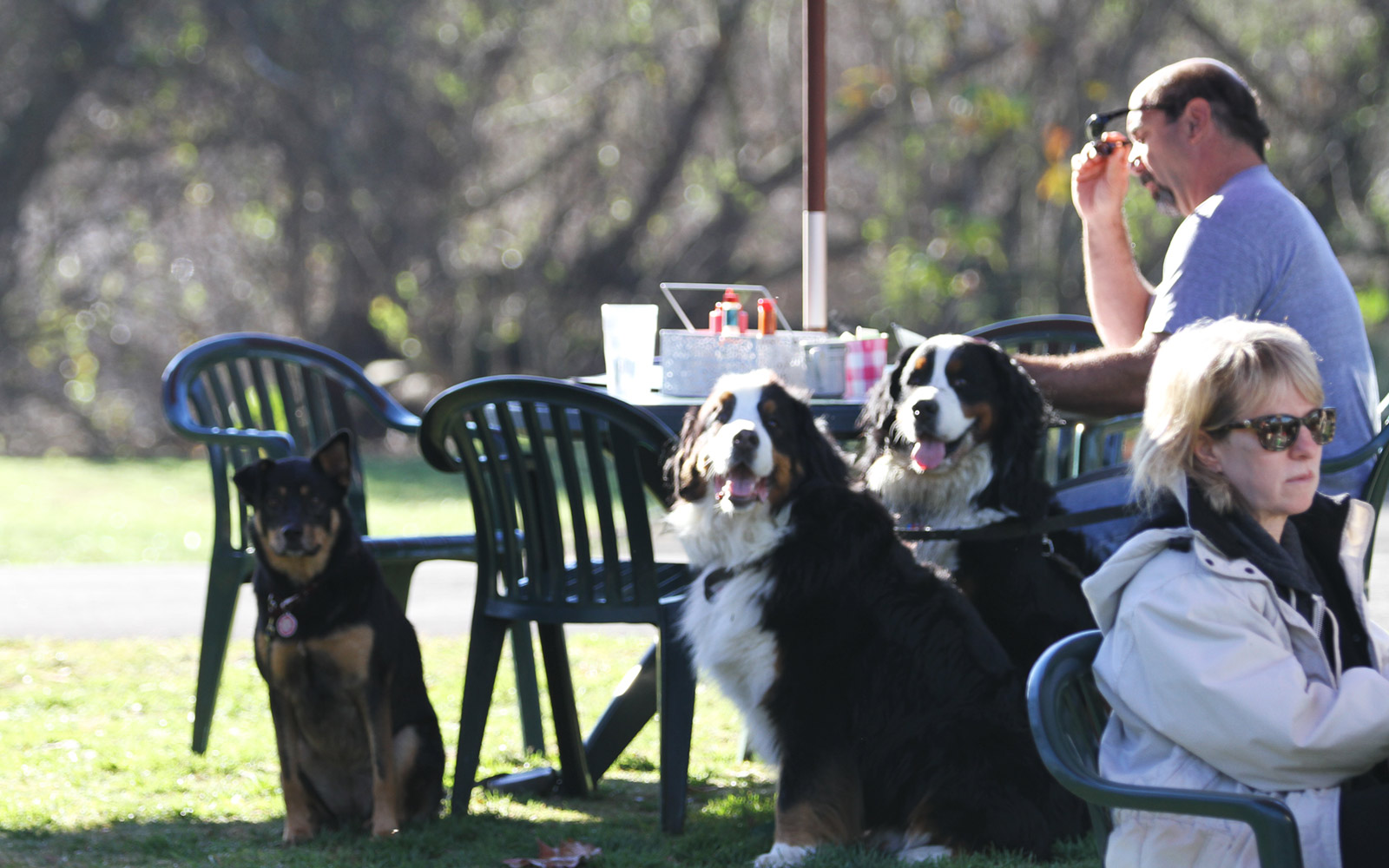 The Most Dog-friendly Restaurants in the U S  | Travel + Leisure