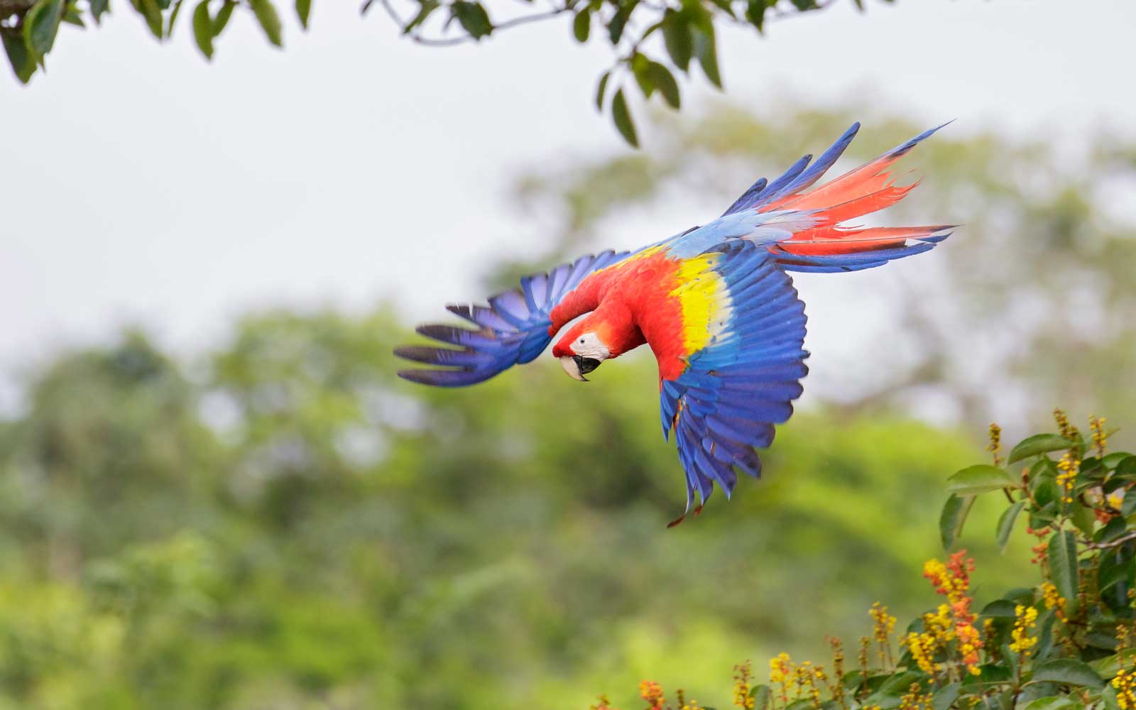 Costa Rica Bird Watching