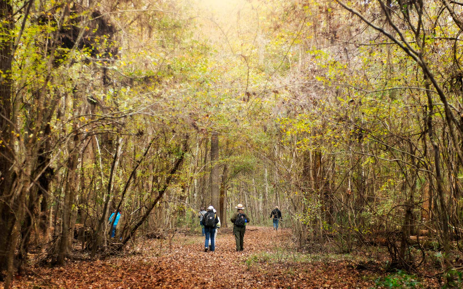 South Carolina's Only National Park Is a Hidden Gem You'll Want to Explore