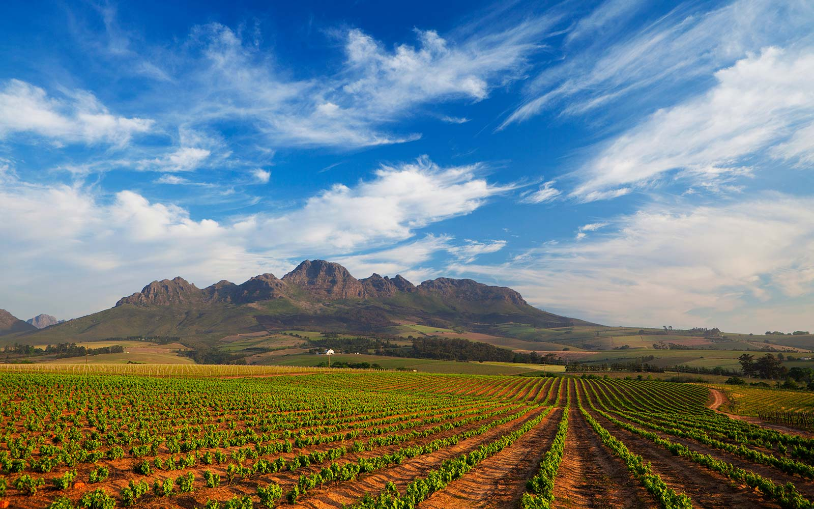Planning the South African Wine Vacation of Your Dreams Just Got Easier