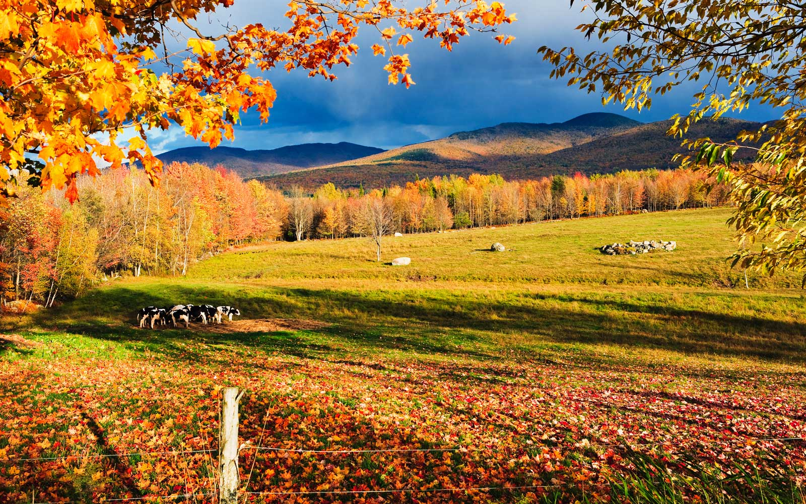 20 Fall Festivals in Canada to Get You Excited for Sweater Weather