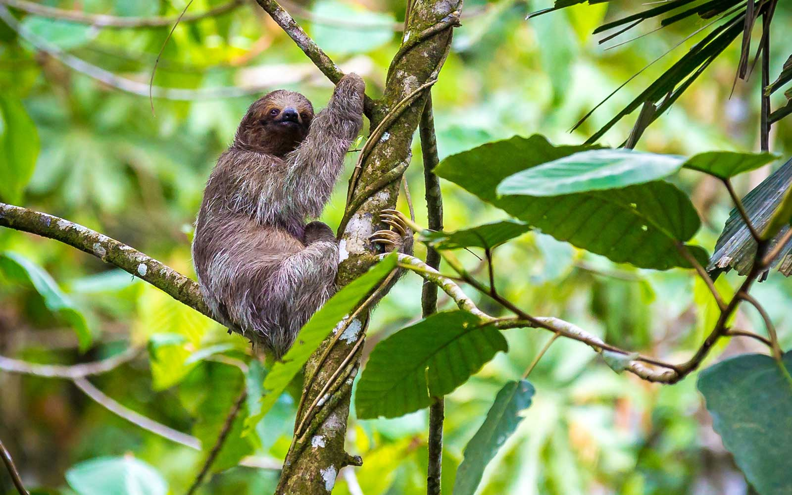 Sloths at Nayara Resort in Costa Rica