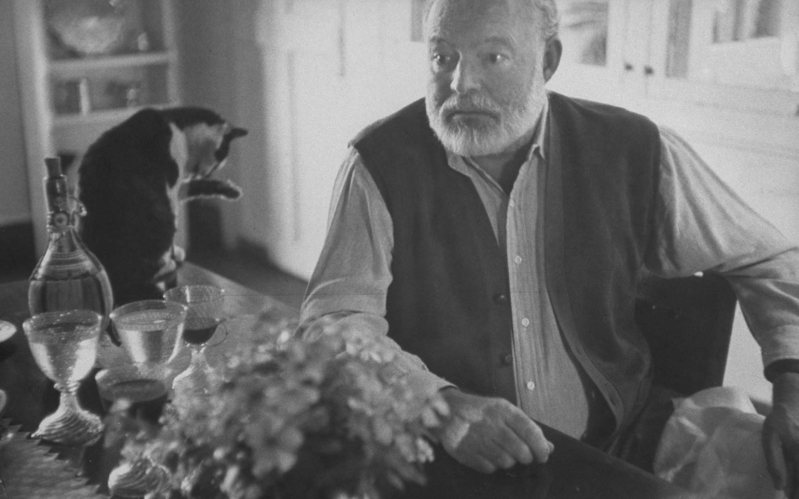 Ernest Hemingway Six Toed Famous Cats Key West Florida Home Museum Hurricane Irma