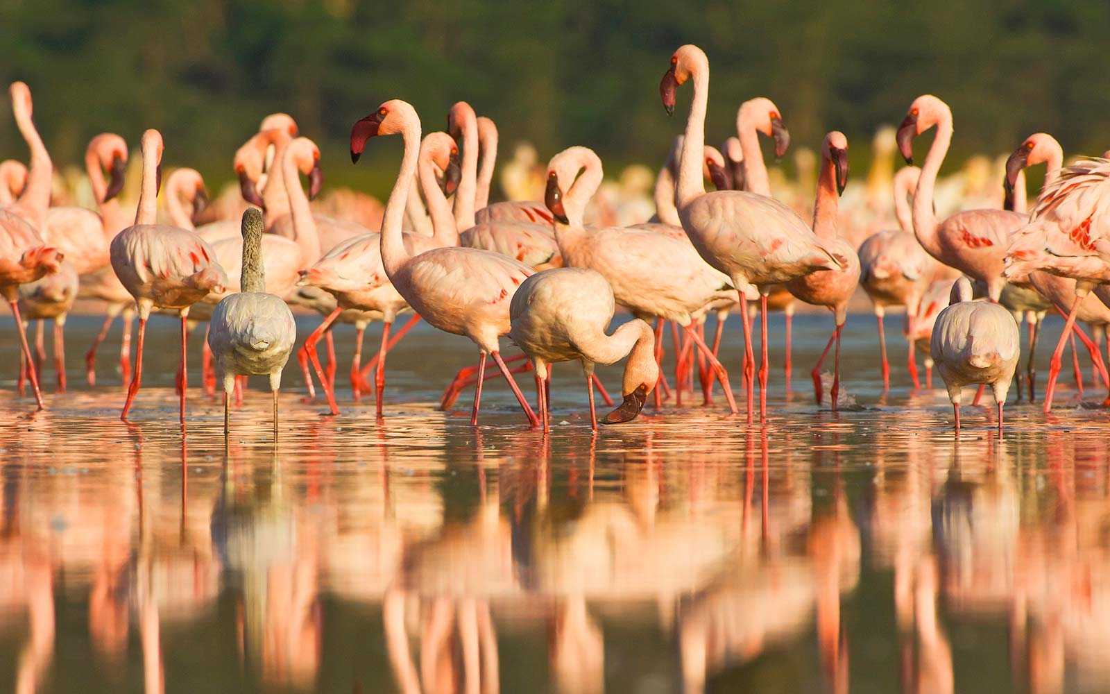 These Flamingos Made a Most Orderly Evacuation Ahead of Hurricane Irma