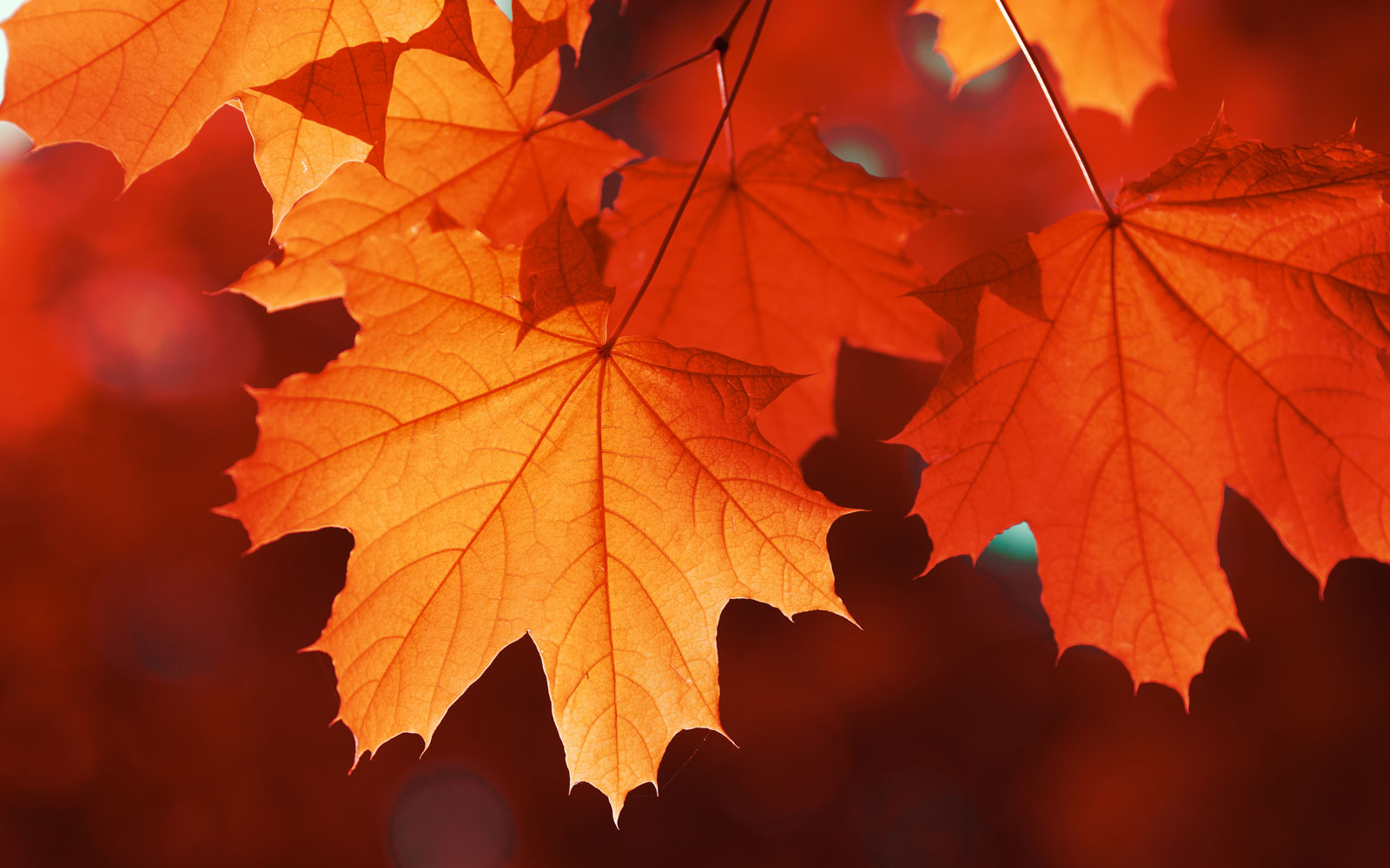 This Company Will Give You $1 for Every Fall Leaf You Send Them