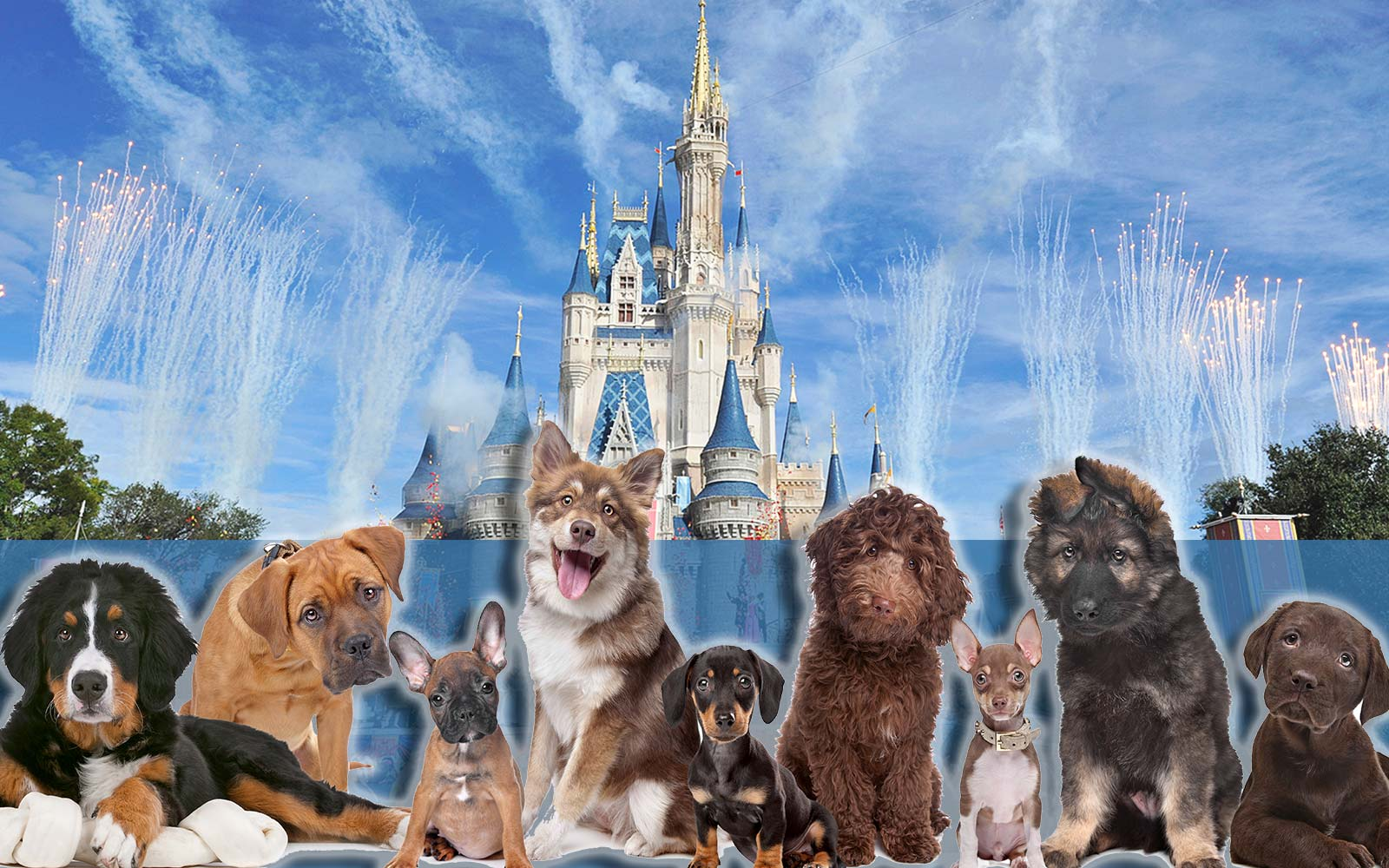 Disney World Hotels Are Allowing Dogs for the First Time Ever