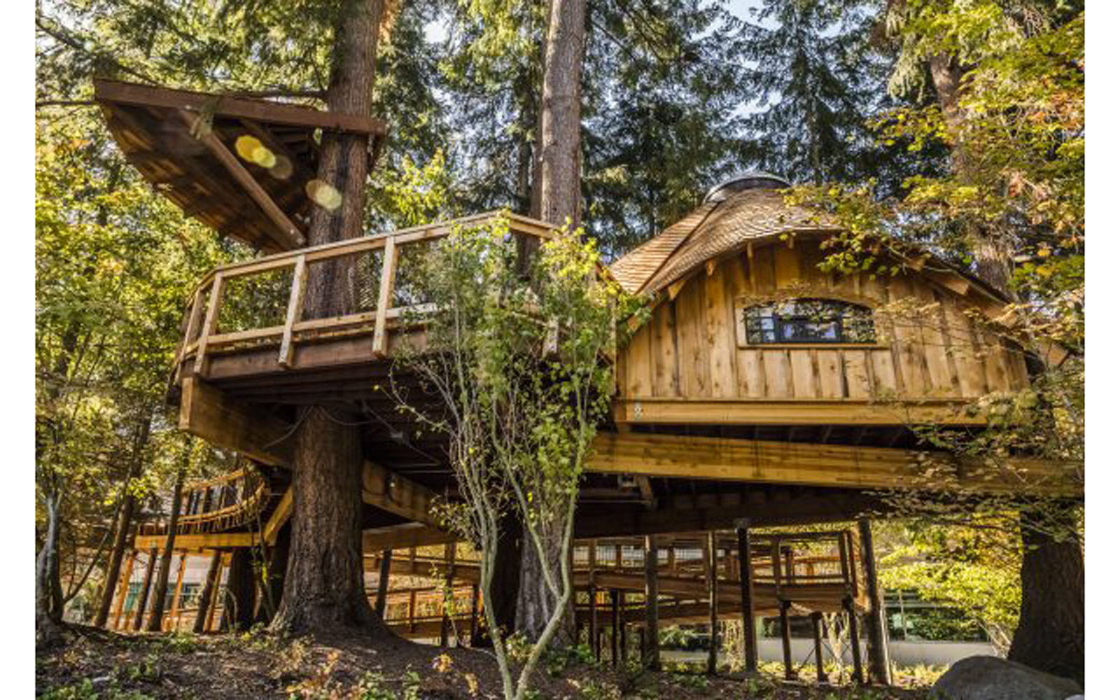 Exterior shot of Microsoft's new employee treehouses