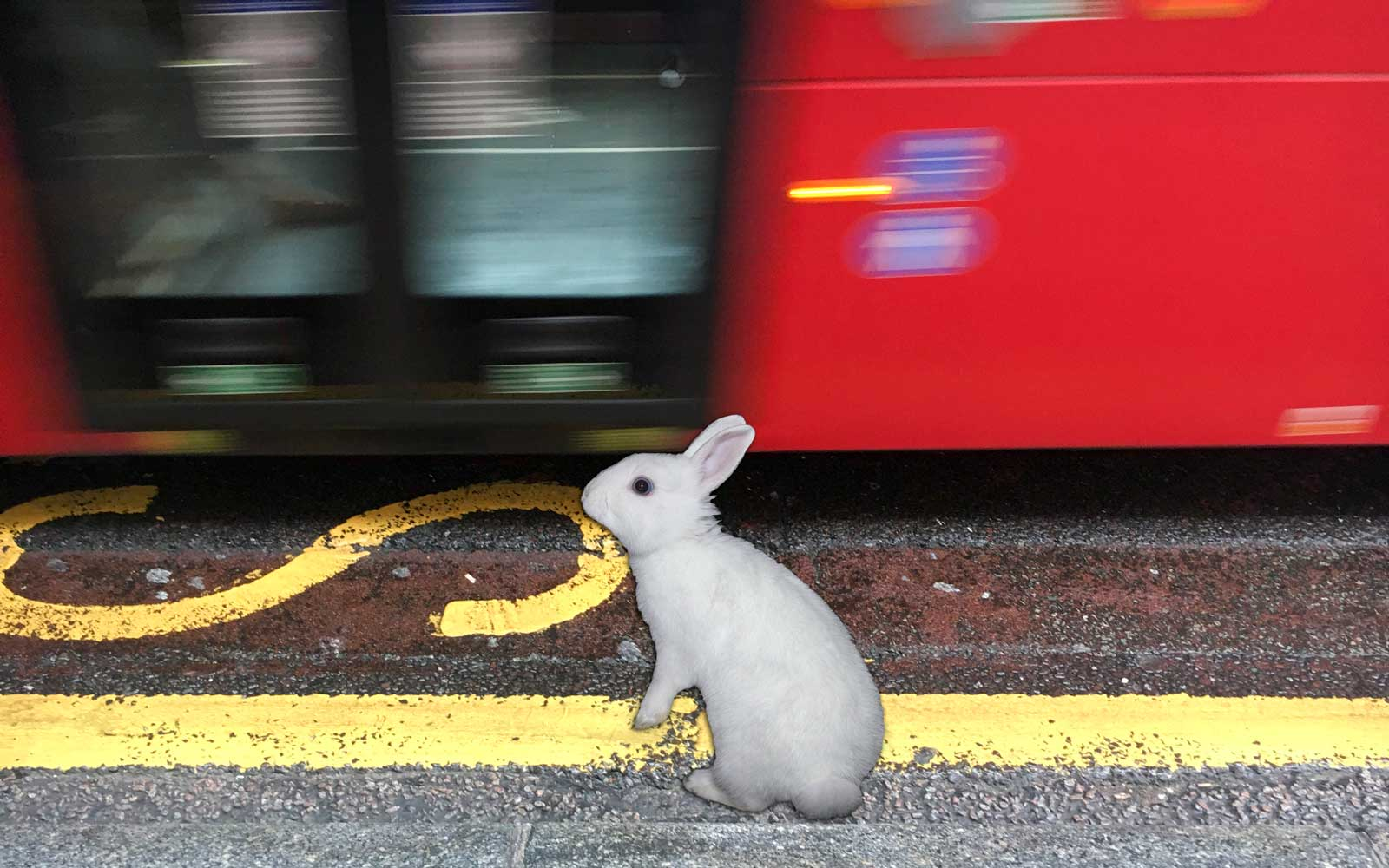We Hope This Rabbit Riding the London Underground Isn't Late for a Very Important Date