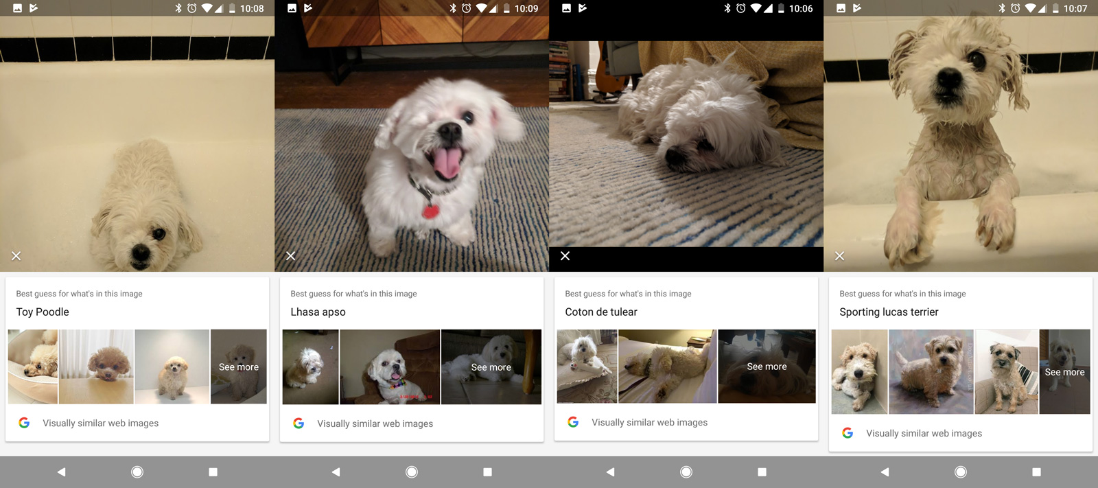 Pirate, the dog, through Google's Lens.