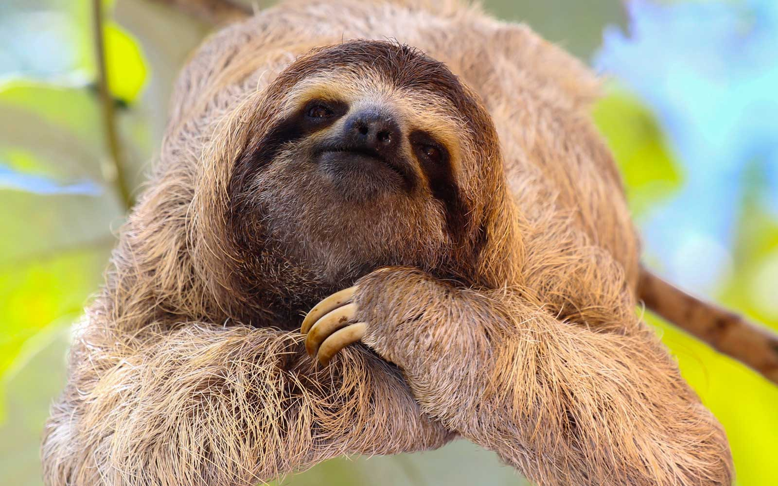 Where to Hang With Sloths on International Sloth Day