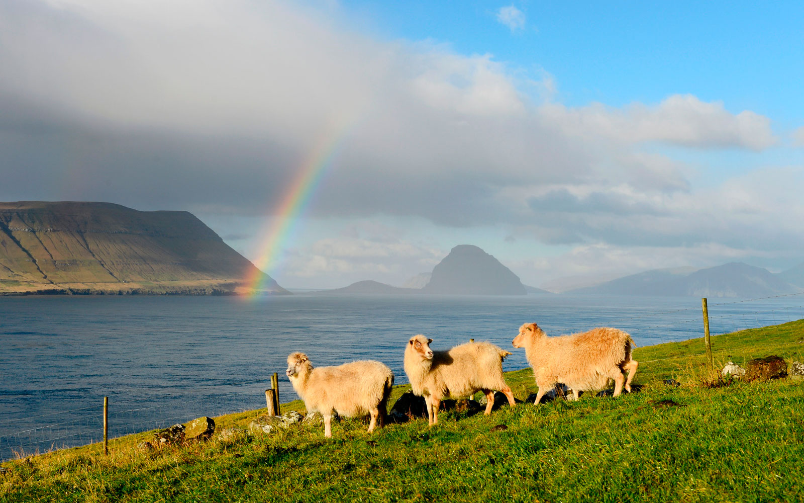Google Maps Is Coming to the Faroe Islands, Thanks to Sheep