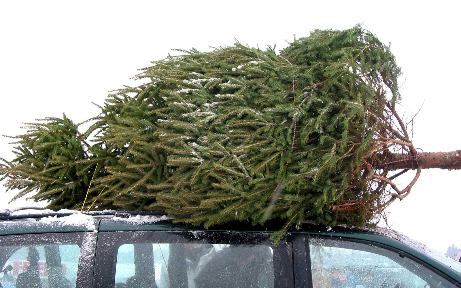 This Car Was Carrying a Christmas Tree so Big, It Got Pulled Over by the Police
