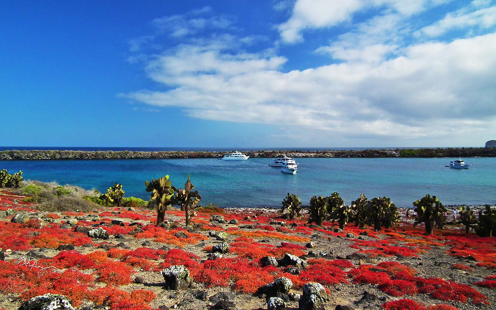 Galapagos National Park Islands Wildlife UNESCO Ecuador