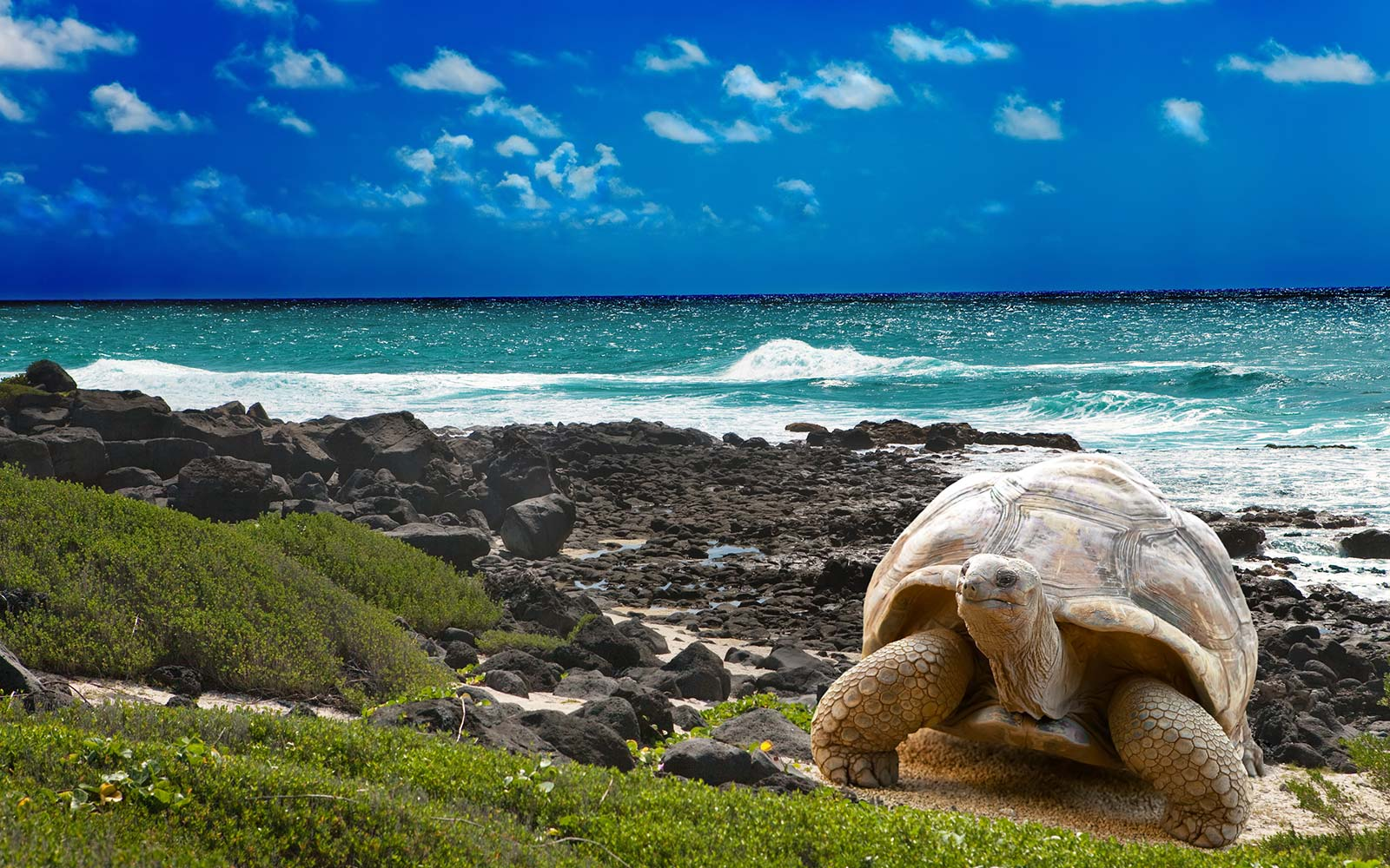 Galapagos National Park Islands Wildlife UNESCO Ecuador tortoise
