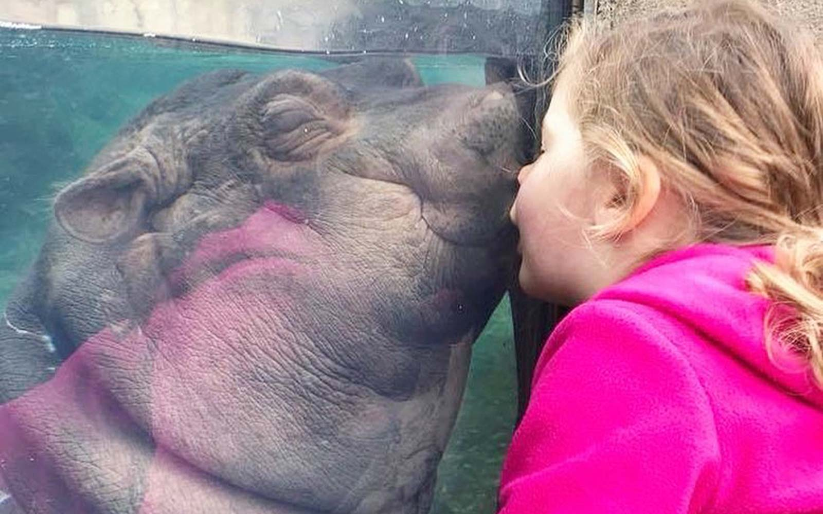 Fiona the Hippo Kissing a Little Girl Is the Cutest Thing You'll See Today