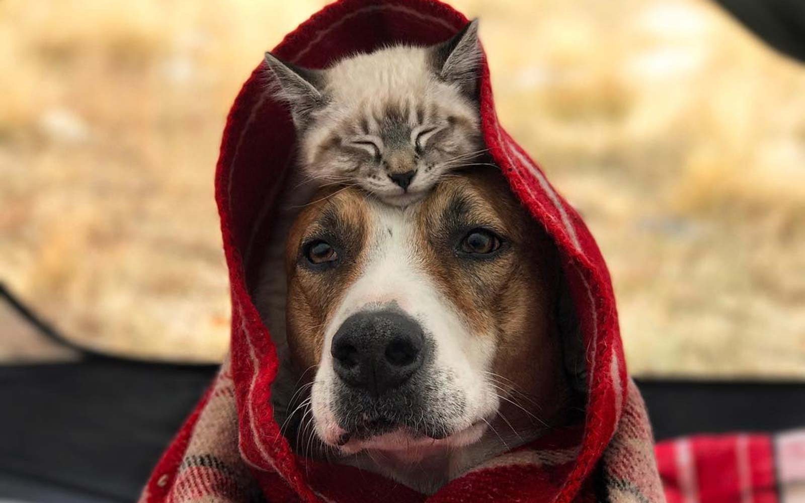 This Dog and Cat Are Best Friends and They're Traveling the World Together