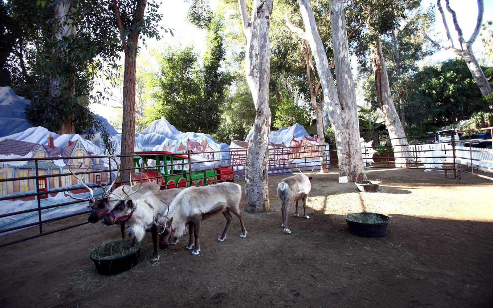 Los Angeles Zoo in Reindeer Village