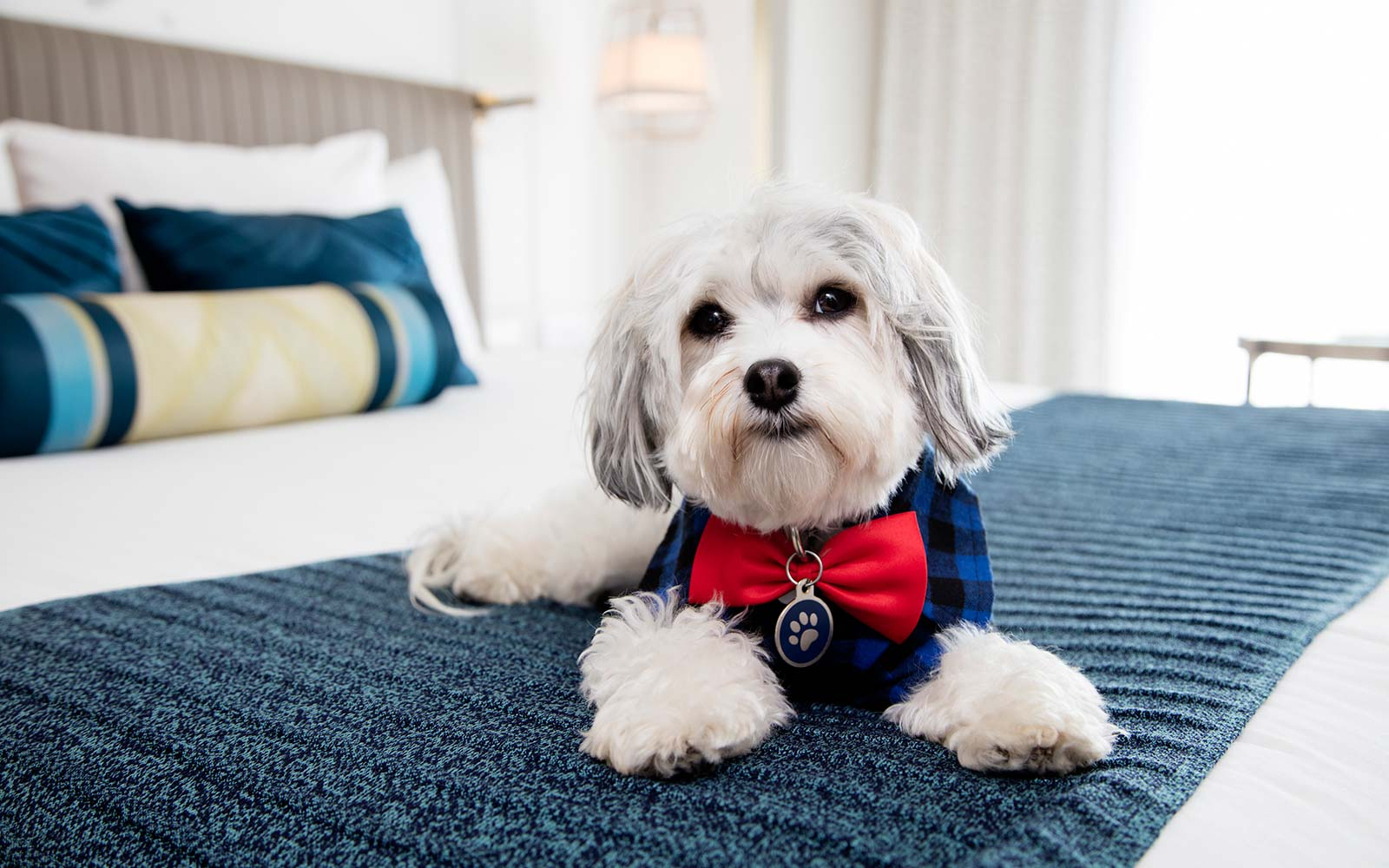 This Hotel Offers Puppy Cuddles on Demand
