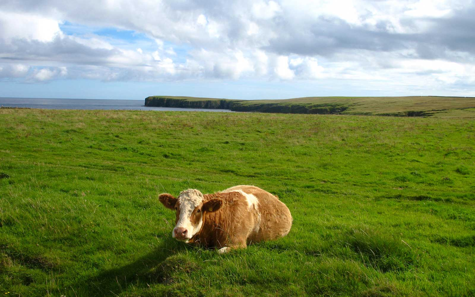 This Remote Scottish Island Really Wants Frustrated City Dwellers to Move There