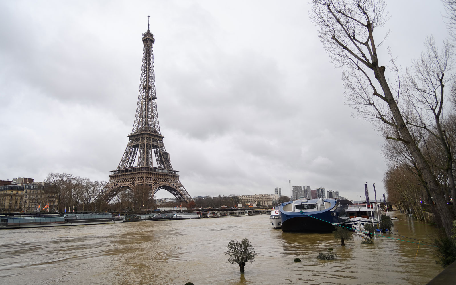 Paris Is Flooded With Rats As the Seine River Continues to Rise