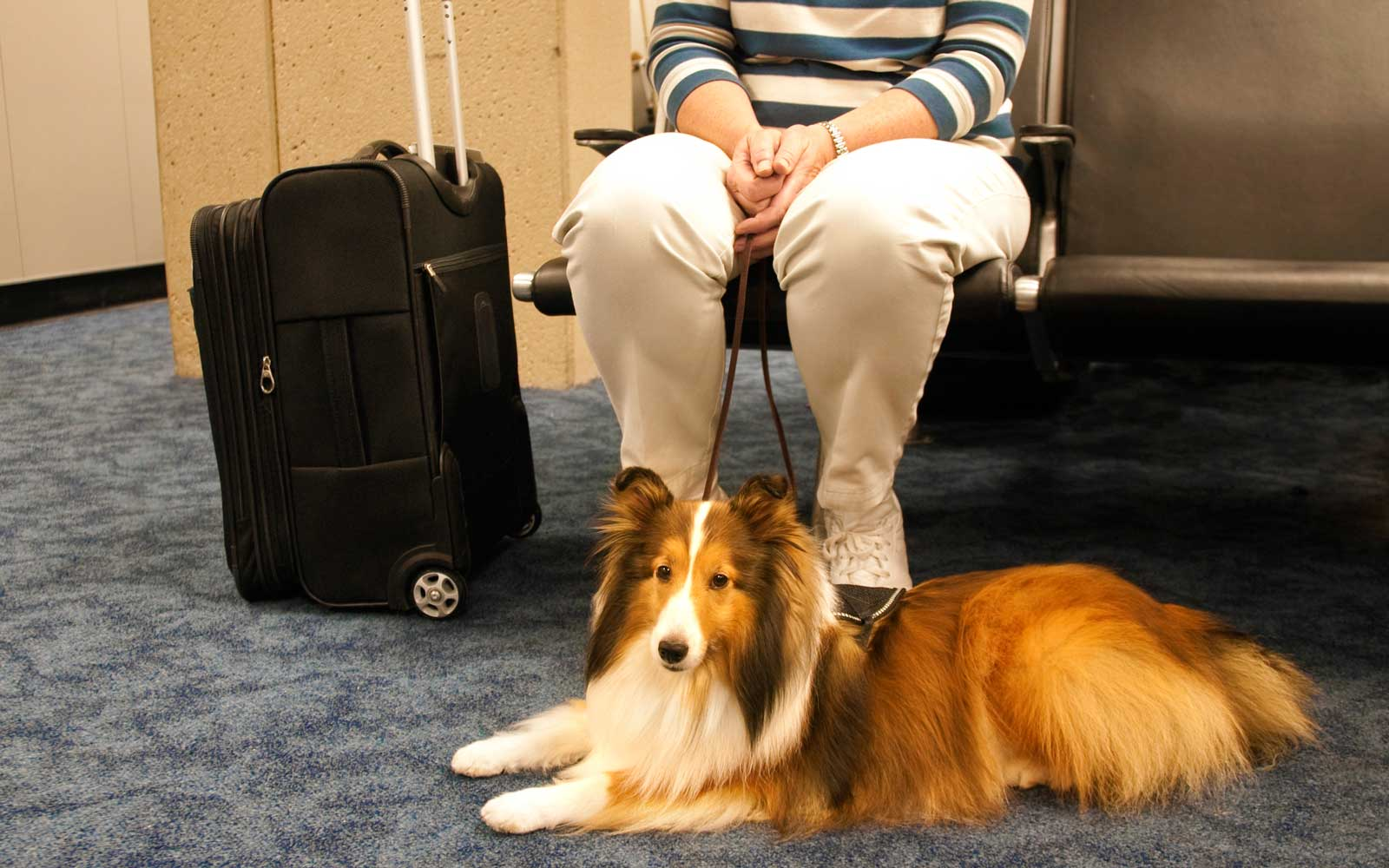 Traveling With A Service Dog On Southwest