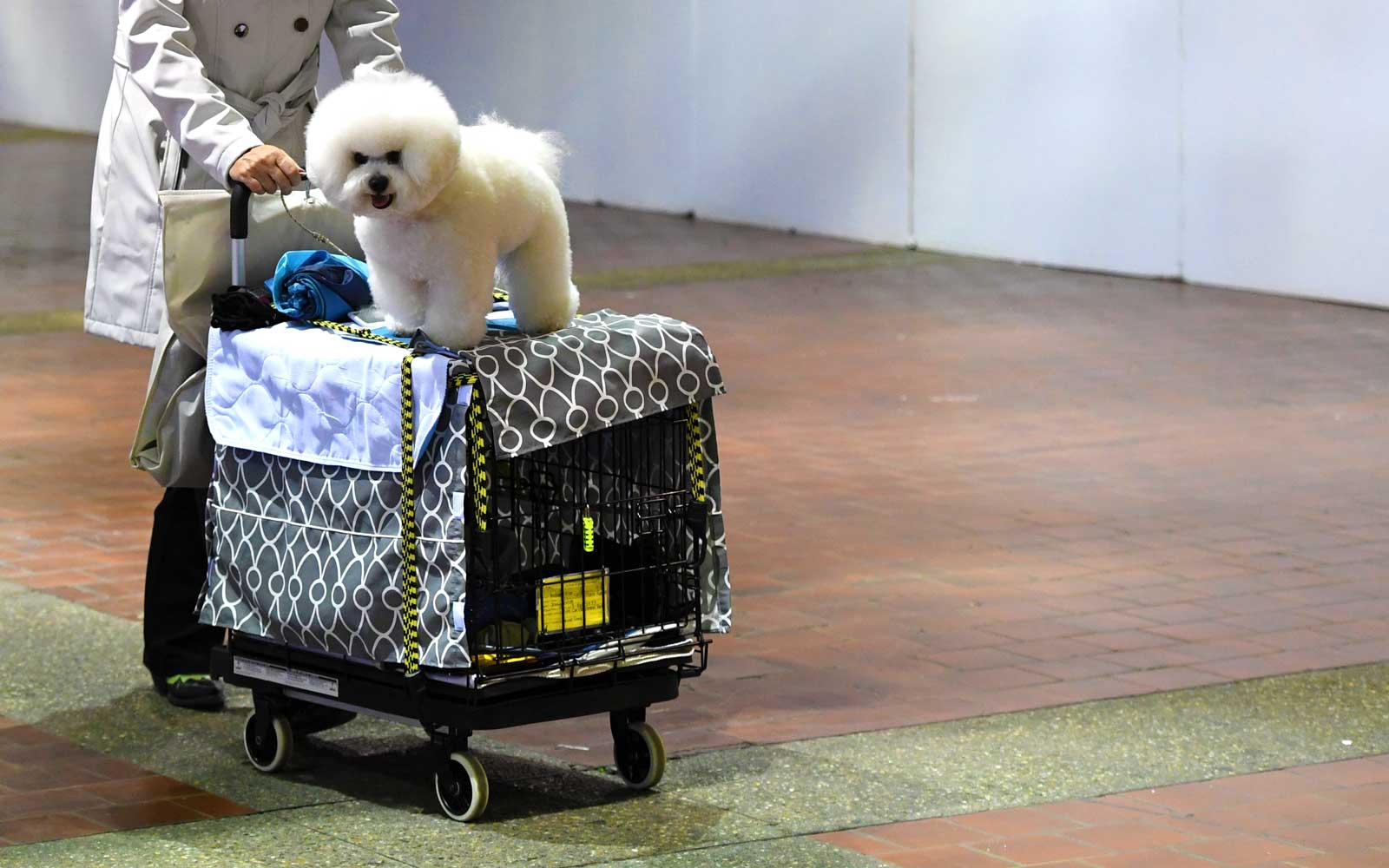 Inside the NYC Hotel That Hosts Hundreds of Canine Guests During the Westminster Dog Show