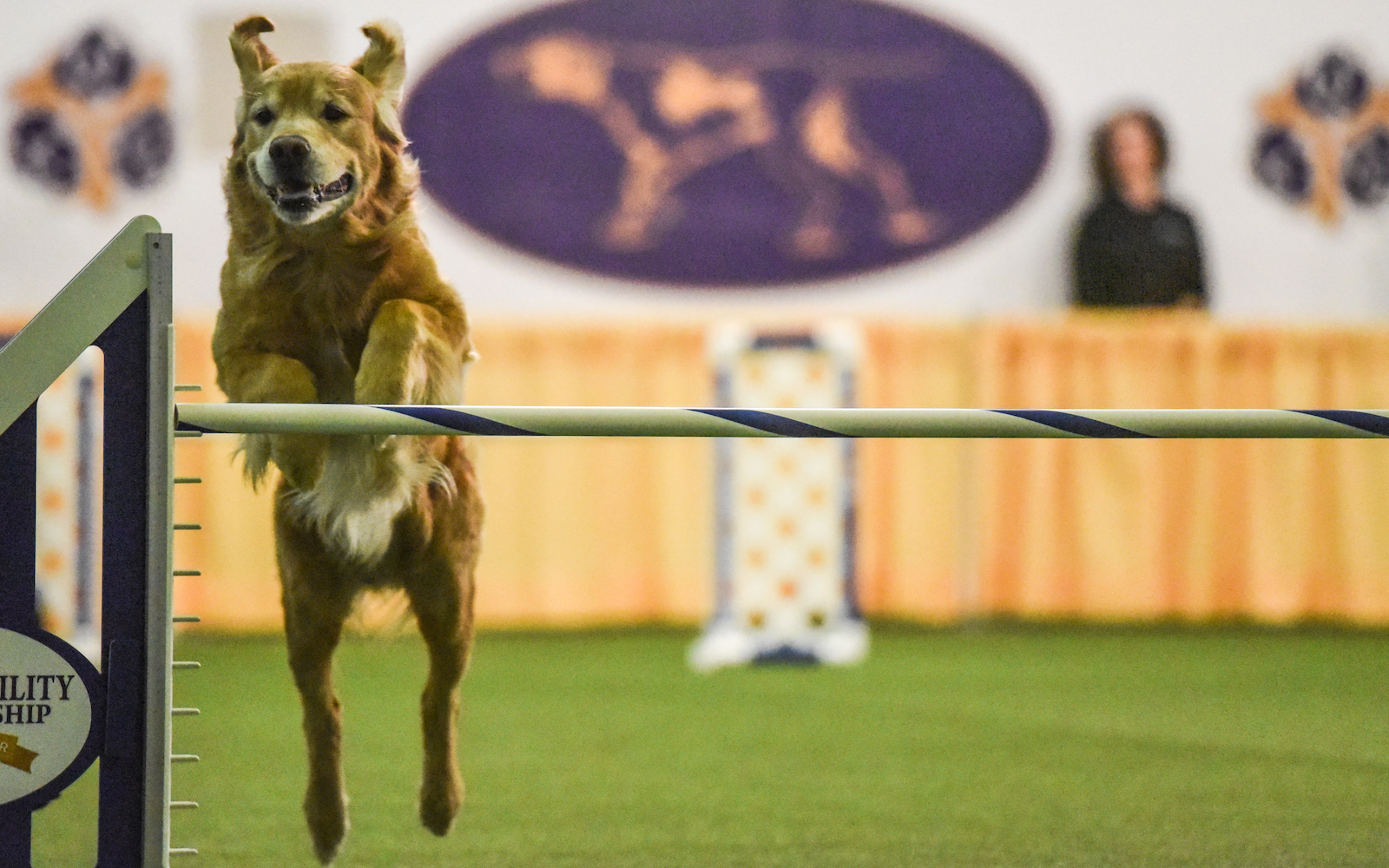 masters agility championship 2018 westminster dog show