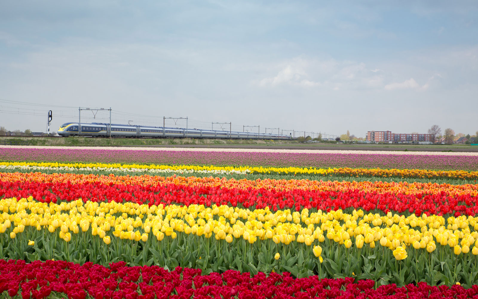 Fast Eurostar Train From London to Amsterdam Coming for Tulip Season